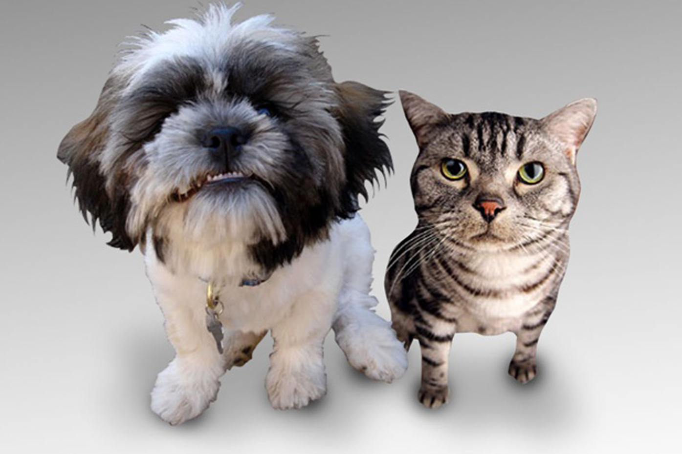 Dog and Cat_1439994237751.jpg