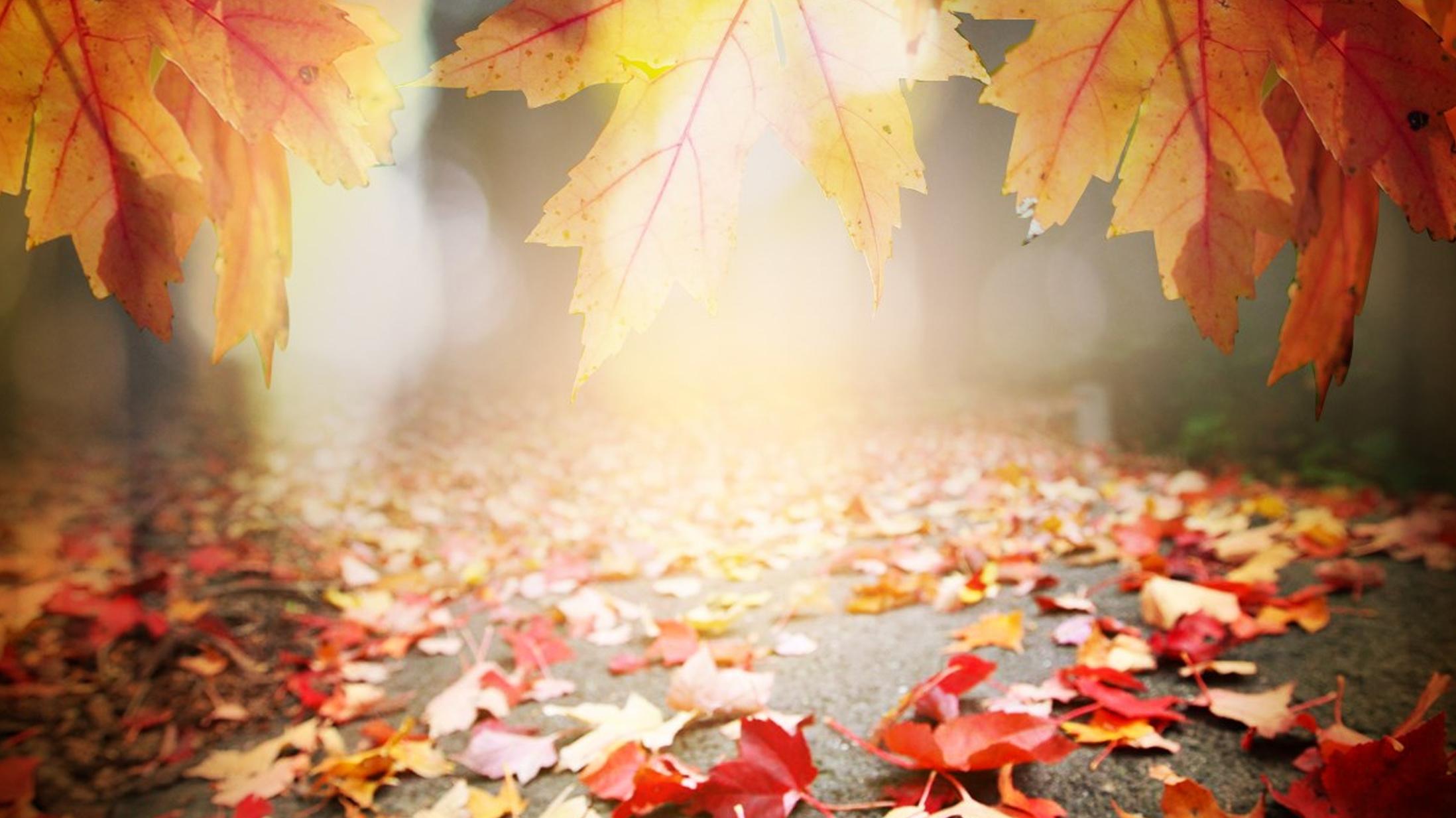 Fall Leaves FOR WEB_1445862163266.jpg