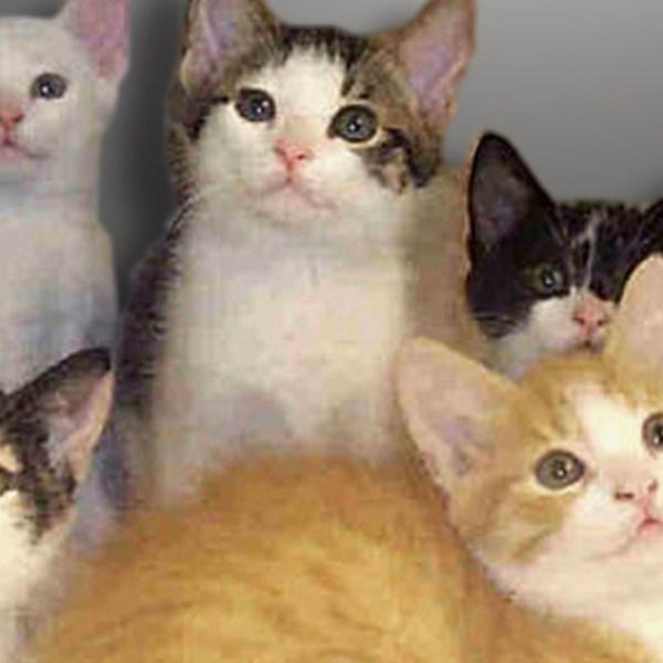 Animal Shelter FOR WEB_1448572403780.jpg