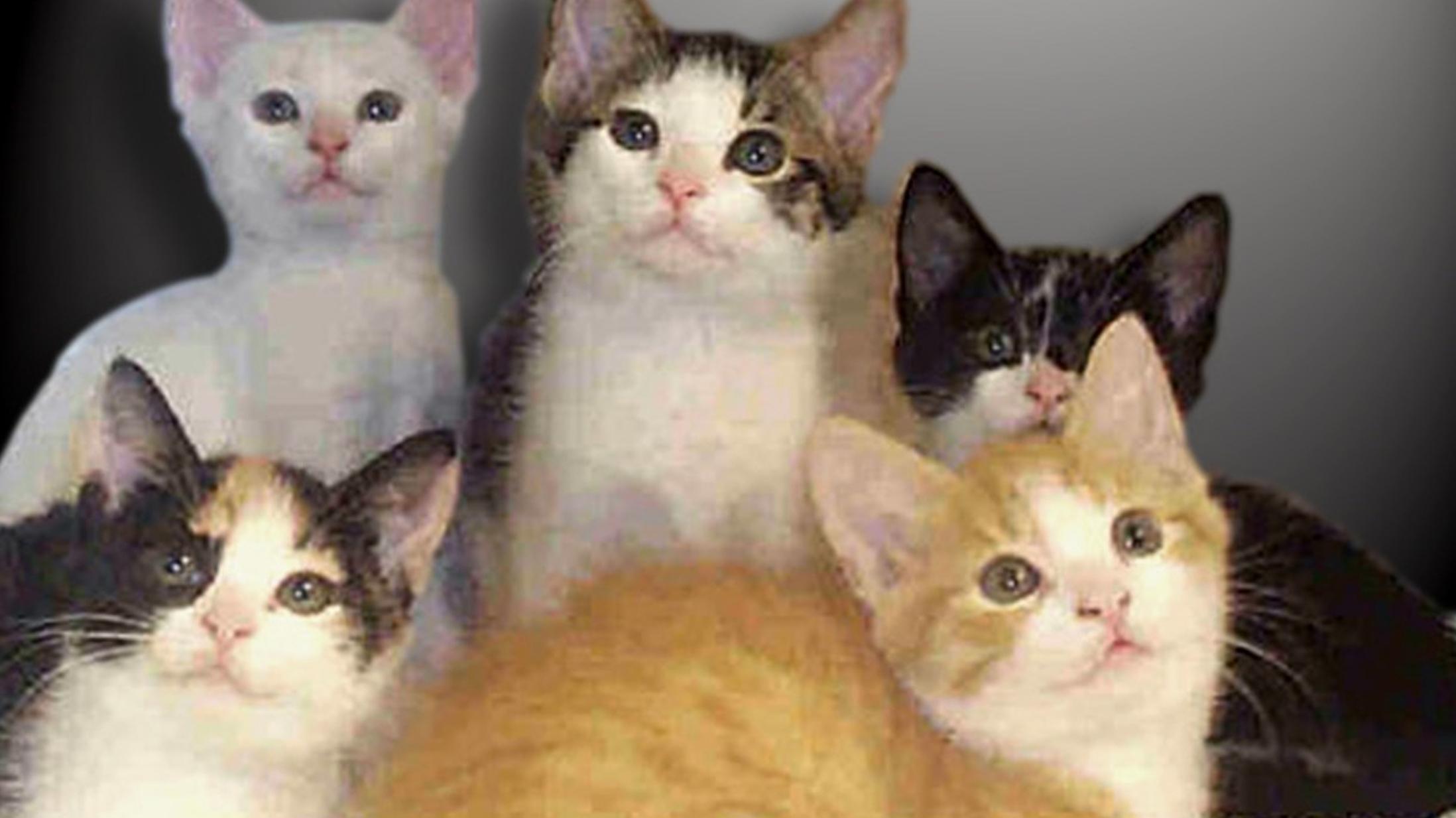 Animal Shelter FOR WEB_1450909834464.jpg