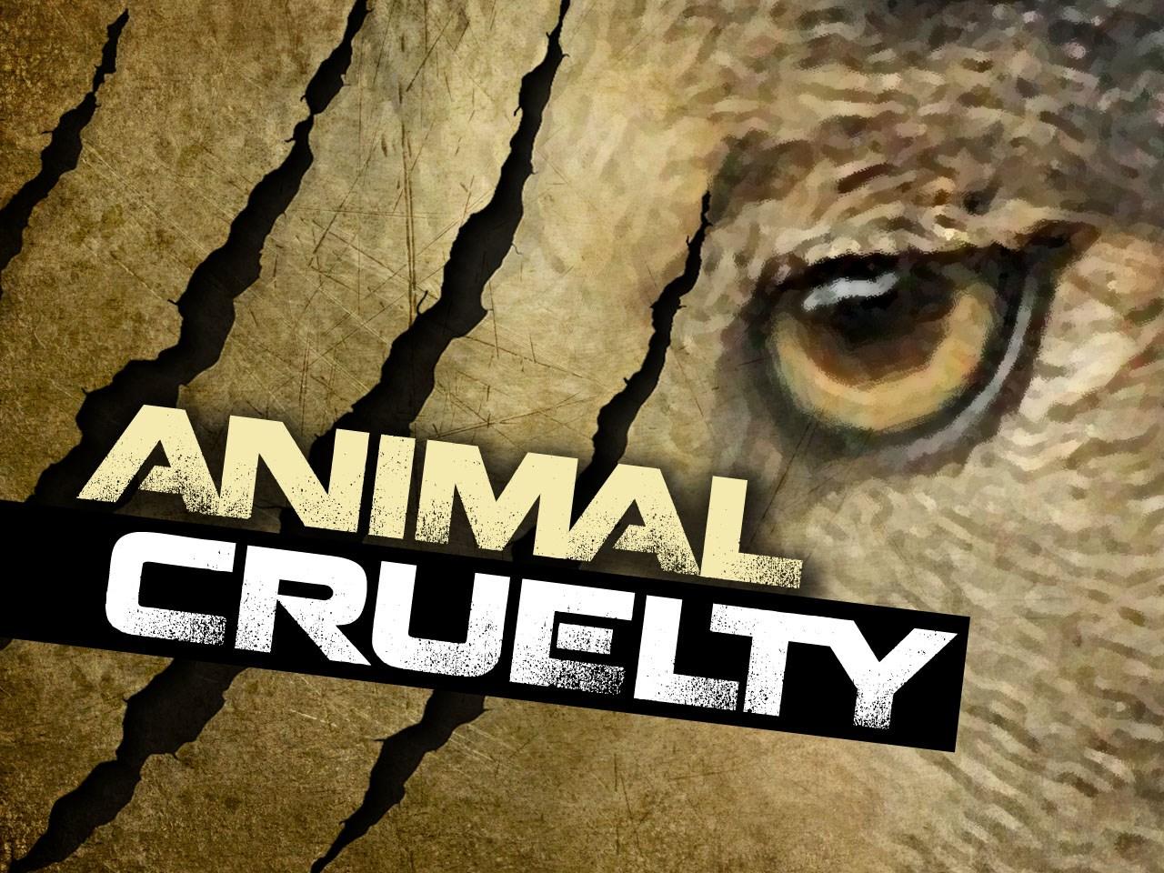 ANIMAL CRUELTY_1453221298004.jpg