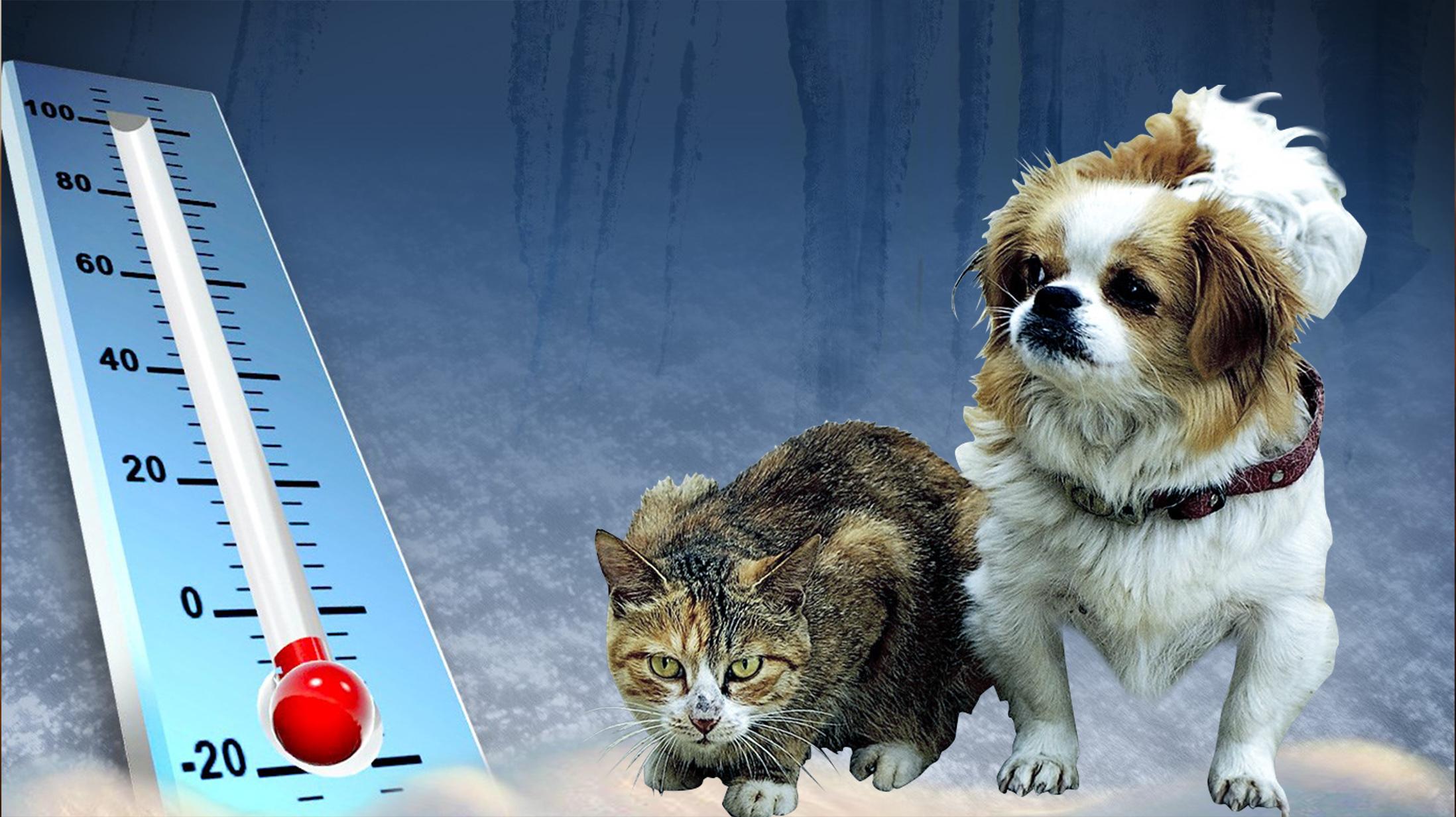 Weather Pets_1453507007355.jpg