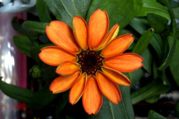 space flowers_1453238638258.jpg