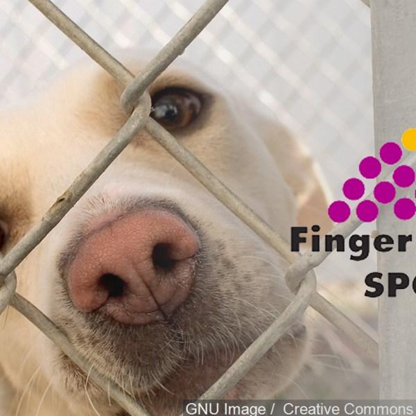 Fingerlakes SPCA Dog_1455753671738.jpg
