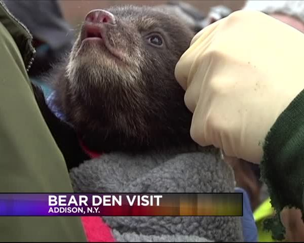 DEC Pays a Visit to Local Bear Den_94281685-159532