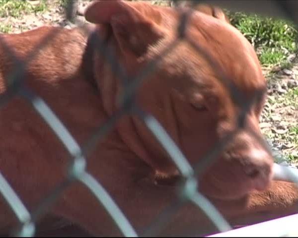 Horseheads Animal Shelter Celebrates Donation_25524672-159532