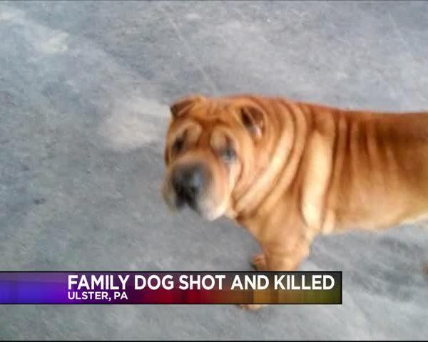 Family Dog Shot and Killed_54971665-159532