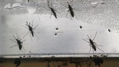 Zika-mosquitos-jpg_20160722213207-159532