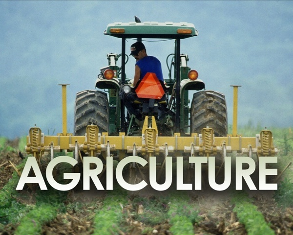 Agriculture_1471403464088.jpg