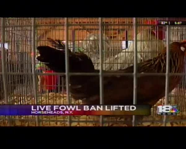Live Fowl Ban Lifted For Fairs Statewide_67915039-159532