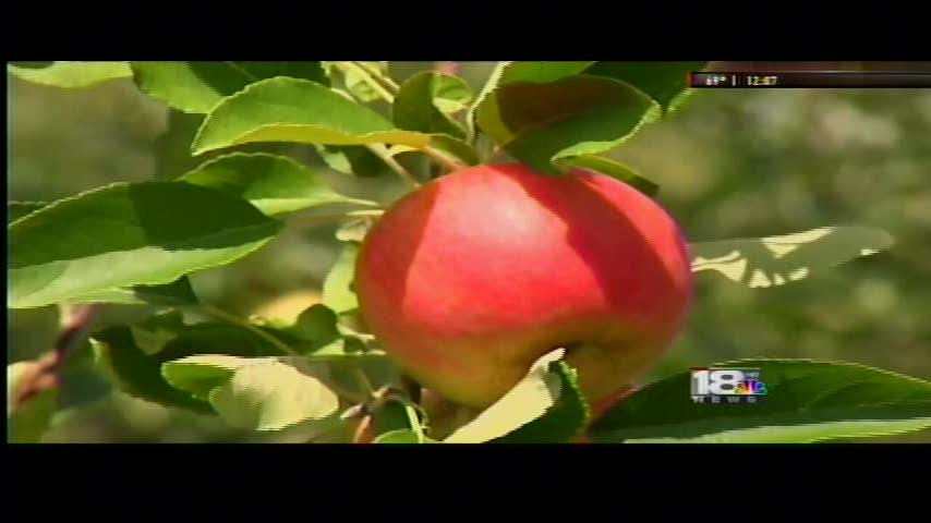 Opening Day at Reisinger Apple Country Farm_50256111-159532