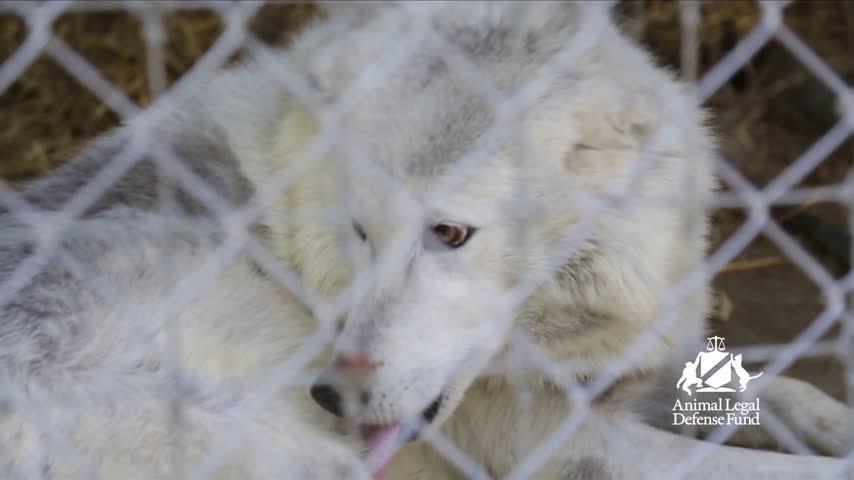 Local Zoo Permanently Closes After Reported Inhumane Practic_26943672-159532