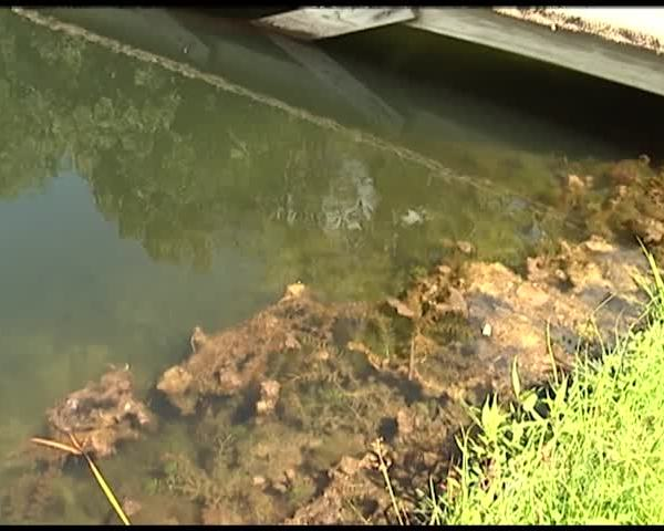 Toxic Algae Impacting Local Deer Population_62247493-159532