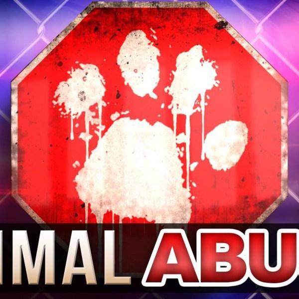 Animal Abuse Web 10-14-16_1476502016282.jpg