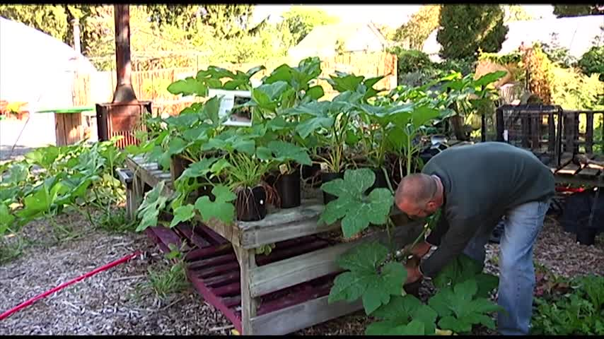 Protecting Your Vegetables- Fruit When the First Frost Hits_67132420-159532