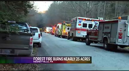 FOREST FIRE_1479086659291.png