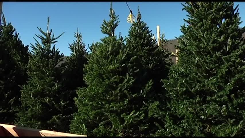 West Elmira Fire Department Christmas Tree Fundraiser_34707029-159532