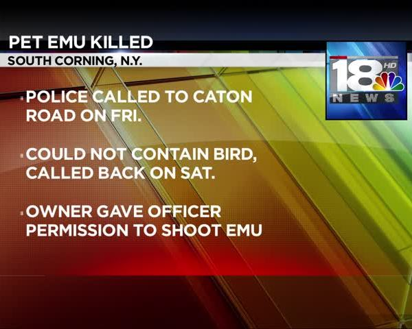 Police Shoot and Kill Pet Emu in South Corning_99812762