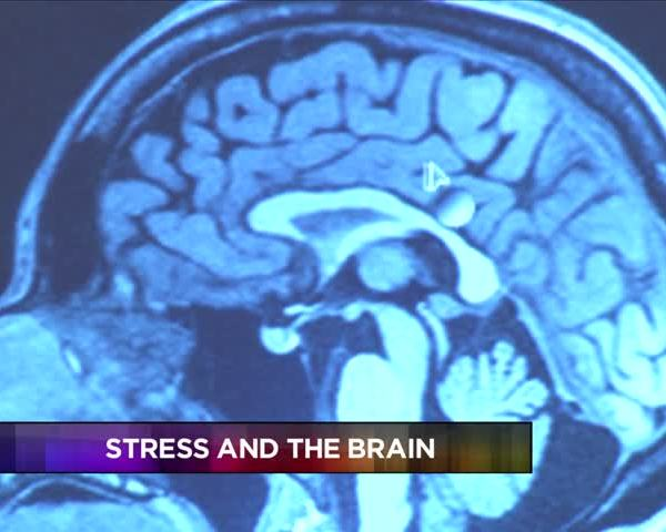 Scientists Examine Correlation of Stress and the Brain_21244494