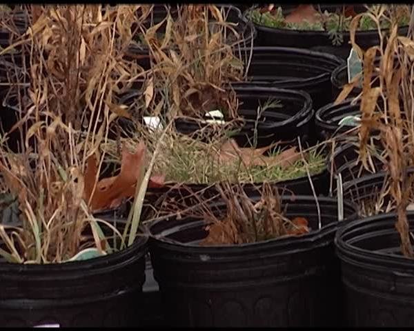 Why Snowpack is Can Keep Plants Alive Throughout Winter_99926930