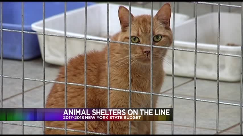 Animal Shelter on the Line in New York State Budget