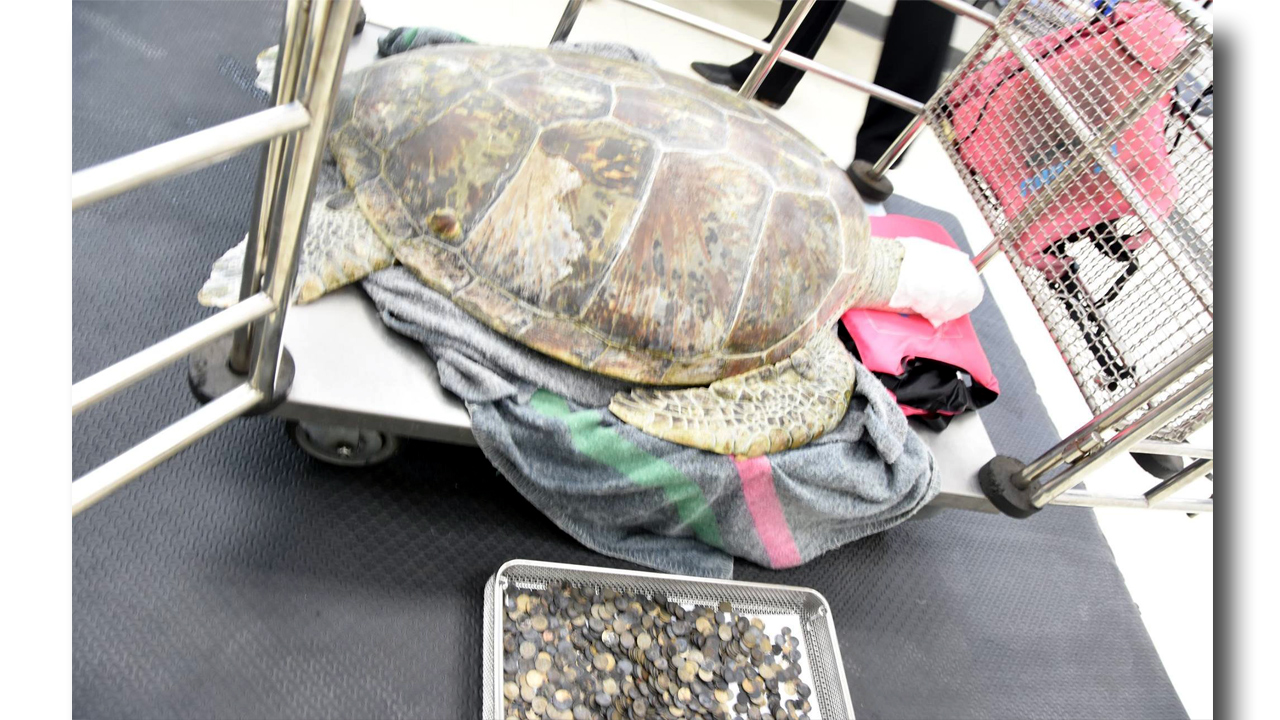 Piggy Bank Turtle-159532.jpg05906186