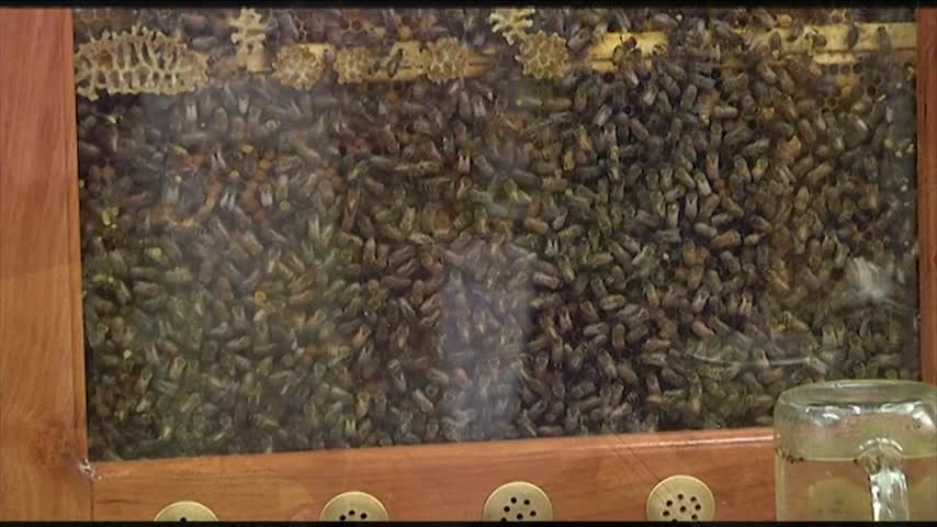 The Buzz on Beekeeping at 2017 Geneva Bee Conference_22061191