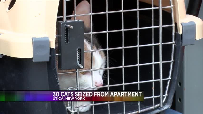 Utica Woman Has 30 Cats Seized From Apartment_85521895