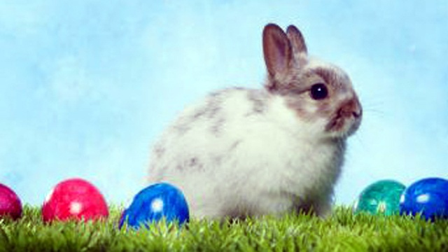 Easter bunny, eggs, candy_1947581841955248-159532