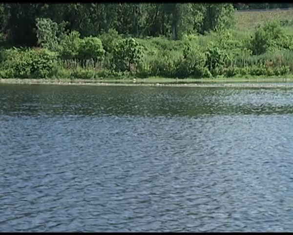 D-E-C- Survey Suggests Strong Fishing Year for Chemung River_30725599