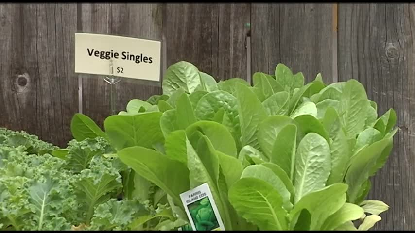 When to Plant Vegetables in the Twin Tiers_59913497