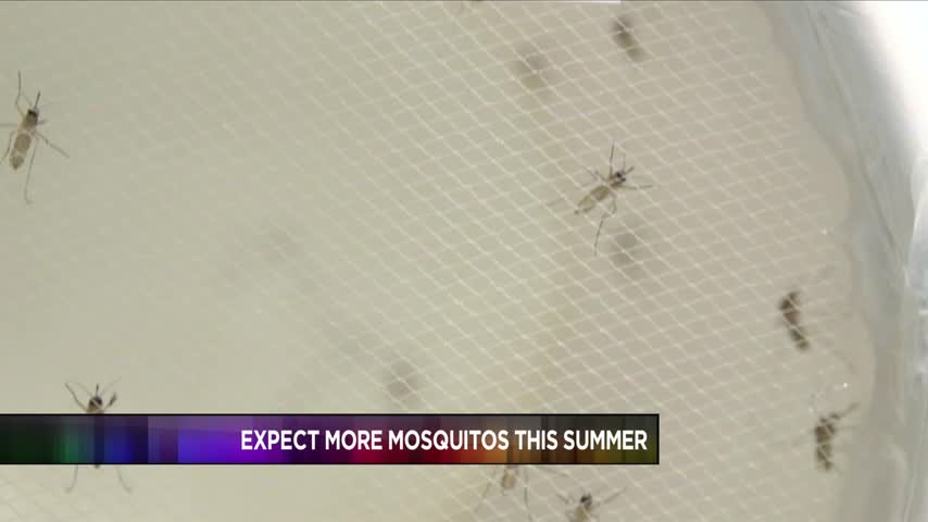 CDC detecting more mosquitoes than previously thought_10148079