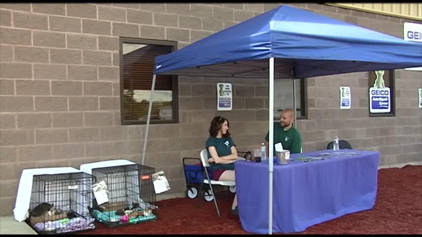 Community members donated pet supplies_67504466