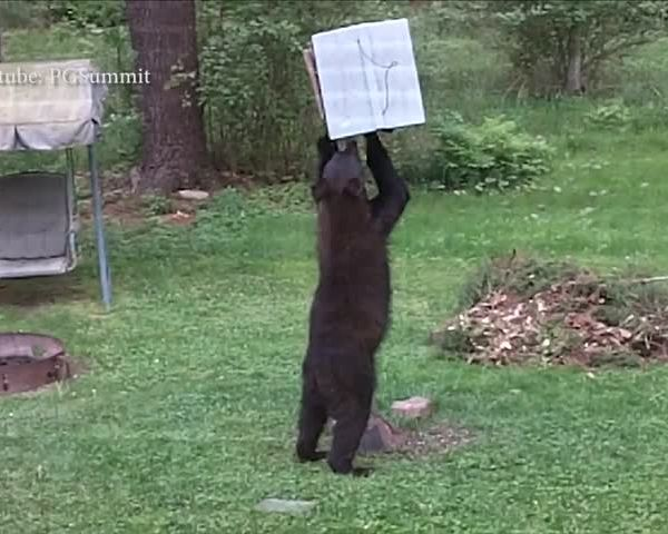Corning Police warn of bear complaints- how to prevent_66432522