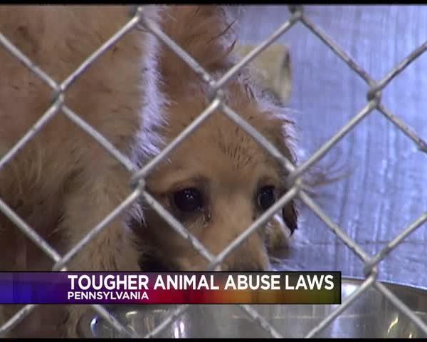 Pennsylvania toughening animal cruelty- neglect laws_43855209