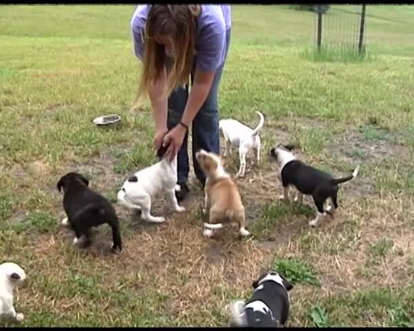 Second Chance Animal Sanctuaries open house in Tioga County_05444663