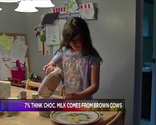 Study- 7- of Americans think choc- milk is from brown cows_36770862