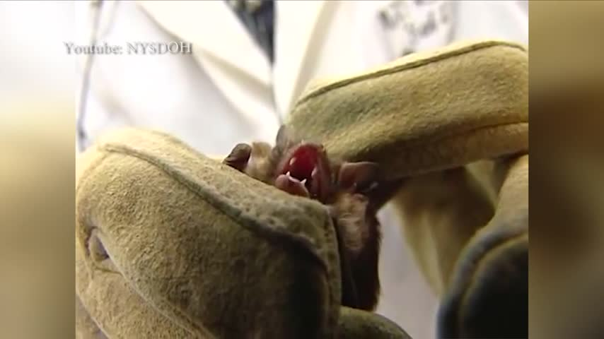 What to do if you encounter a bat in your home_62220709