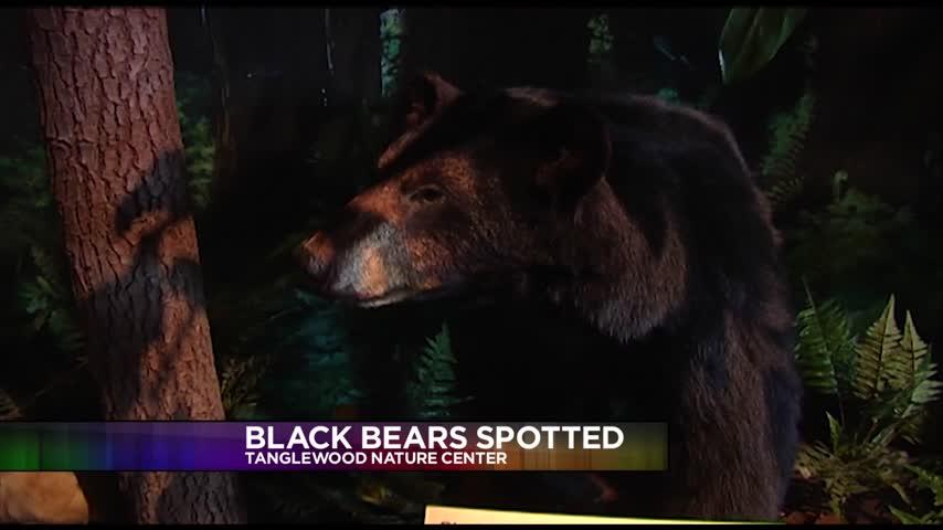 Bear sightings increase in the Twin Tiers_23917694