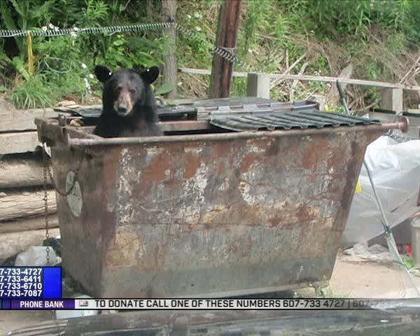 Black bear feeding season underway in Wellsboro_04067259