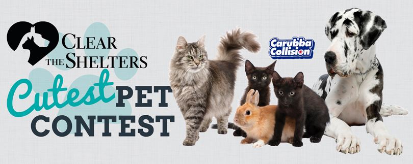 PetContest_Header_CTS_1502215991354.jpg