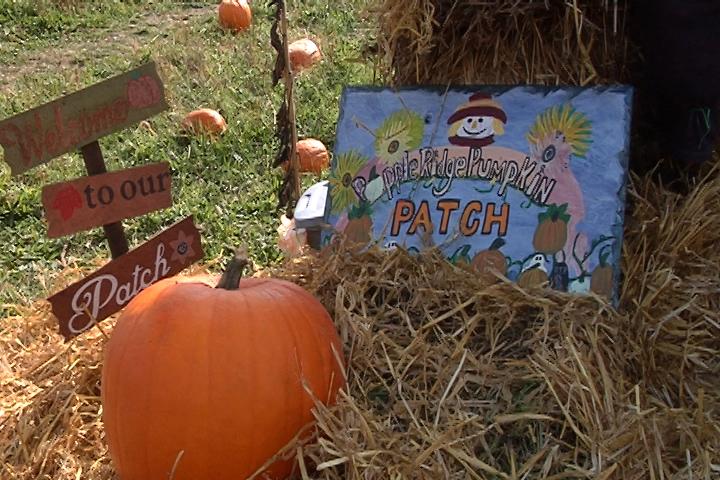 pumpkin patch web_1508701791619.jpg