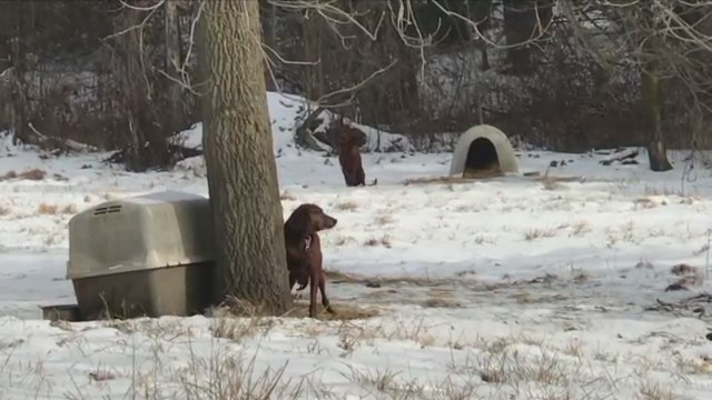 LOWMAN, N.Y. (18 NEWS) - Last Friday we received complaints from Lowmanresidents regarding dogs chained outside in the cold weather behind a vacant home.