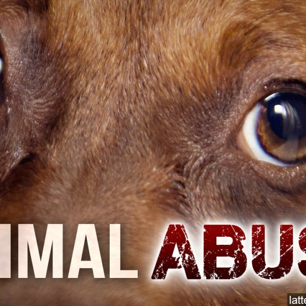 ANIMAL ABUSE (2)_1518214053898.jpg.jpg