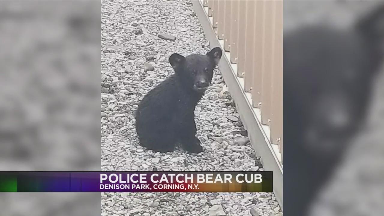 bear_cub_found_in_Corning_0_20180520232741