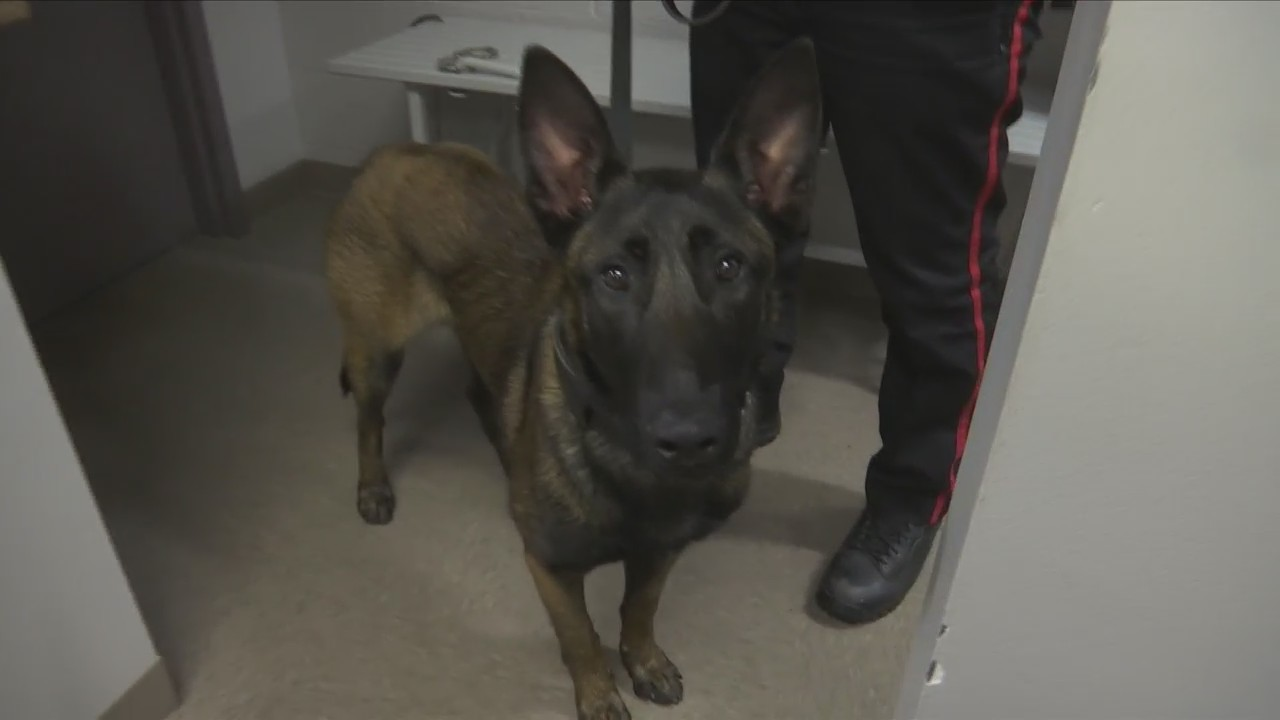 New_police_officer_is_top_dog_in_the_fig_0_20180627222005