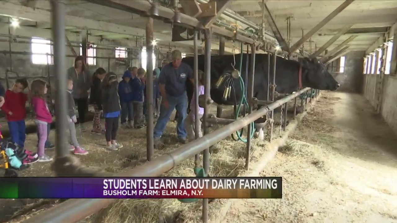 Students_tour_local_dairy_farm_0_20180606220547