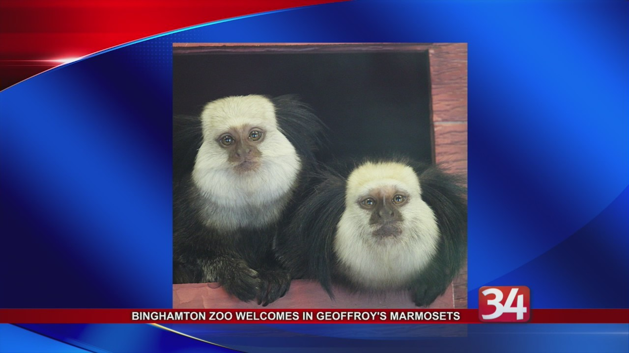Binghamton_Zoo_welcomes_three_Geoffroy_s_0_20180806212038-118809258