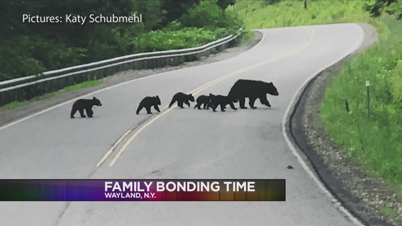 Black_Bears_spotted_crossing_the_road_in_0_20180805034658