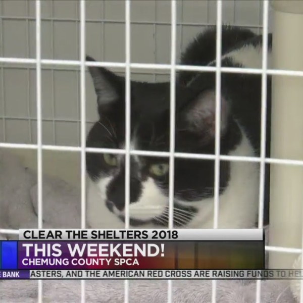 Clear the Shelters Happening this Weekend